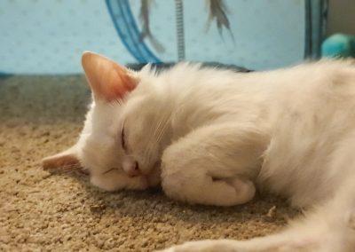 Kitten asleep after too much play