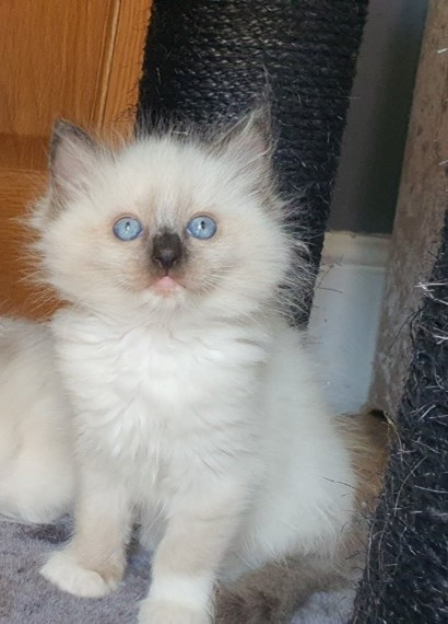mitted 1